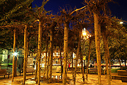 Flailing Trees by night, July 2007, in Manchester, United Kingdom. <br /> <br /> Flailing Trees is a piece of art by Gustav Metzger where 21 willow trees has been up-rooted and put upside down into concrete, symbolising a world turned upside down by global warming.
