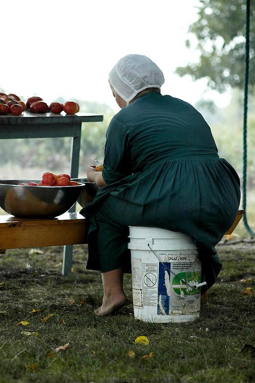 Préparation des conserves de tomates. Les Petersheim, installés comté de Clark depuis quatre générations, ont onze enfants de 5 à 23 ans. Pendant l'été, alors qu'il n'y a pas école, tous prennent part aux activités quotidiennes de la ferme et des récoltes. Sur leur exploitation de 162 hectares, la taille moyenne d'une ferme Amish, ils cultivent de l'avoine, du blé, du maïs, du soja, du sorgo et du millet en suivant des techniques écologiques traditionnelles. Ils ont également 40 chevaux, 25 vaches et un petit élevage de poules et cochons.<br /> <br /> Tomatoes can preparation. The Petersheim, established in Clark county since four generations, have eleven children from 5 to 23 years old. During the summer, whereas the school is closed, all take part in the daily activities of the farm and with harvests. On their exploitation of 162 hectares, average size of an Amish farm, they cultivate oat, wheat, corn, soy beens, sorgo and millet following ecological techniques. They also have 40 horses, 25 cows and a small breeding of hen and pigs.