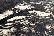 tree shadow on pavement