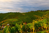Vineyards, Offenburg, Baden-Württemberg, Germany