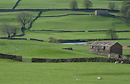Stone barns and stone walls in a field near Bainbridge, Wensleydale in The Yorkshire Dales National Park, Yorkshire, England