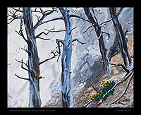 """""""Mammoth Hot Springs, Trees"""", Yellowstone National Park, Test - 10x12 inches Acrylic on canvas"""