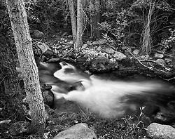 Pre Dawn Foxlight -Crestone Creek, Colorado