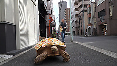 Tokyo - Man Lives With Giant Tortoise - 11 Nov 2016