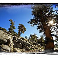Rocky path in high sierras