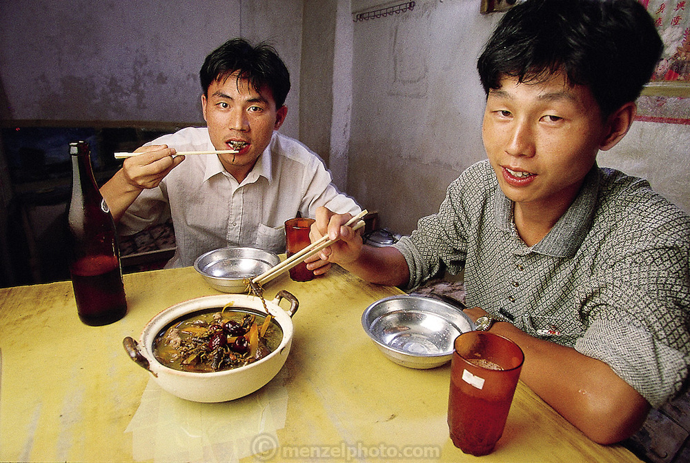 Li Shuiqi, a 26 year-old scorpion seller, and his roommate, You Zhiming, 25, eat scorpion soup. The pair of salesmen keep more than 10,000 scorpions in their apartment to raise and sell (for food and medicine) in the Qing Ping Market, Guangzhou, China. They are woody tasting. (Man Eating Bugs page 92)