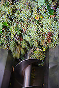The machine used to smash the graped and extract the juice that will be transformed to wine. The vinho verde grape harvest is usually in September.