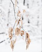Capuozzo Snow Images