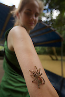 Tarantula climbing on Hope Batcheller at the Tiputini Biodiversity Station, Orellana Province, Ecuador