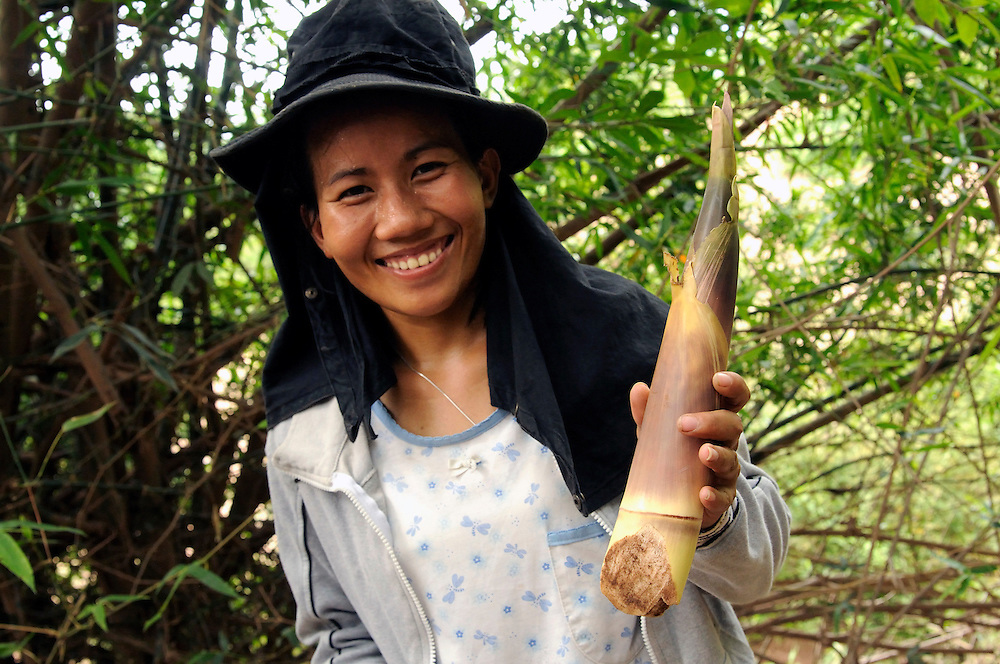 """Saiyasouk Buakeo, age 24, from the Mines Advisory Group female team shows a bamboo shoot she found as food in the forest.  Laos is a poor country with few jobs.  The women are well paid by Laos standards and are given a food allowance.  However, many of their family members often depend on their income so they find creative ways to save money locating food in the forest.  They are also paid in US Dollars which has declined significantly over the last year affecting their income...Laos was part of a """"Secret War"""", waged within its borders primarily by the USA and North Vietnam.  Many left over weapons supplied by China and Russia continue to kill.  However, between 90 and 270 million fist size cluster bombs were dropped on Laos by the USA, with a failure rate up to 30%.  Millions of live cluster bombs still contaminate large areas of Laos causing death and injury.  The US Military dropped approximately 2 million tons of bombs on Laos making it, per capita, the most heavily bombed country in the world. ..The women of Mines Advisory Group (MAG) work everyday under dangerous conditions removing unexploded ordinance (UXO) from fields and villages...***All photographs of MAG's work must include (either on the photo or right next to it) the credit as follows:  Mine clearance by MAG (Reg. charity)***."""