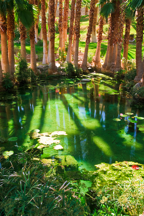Palms and pond at Furnace Creek Inn, Death Valley National Park. California
