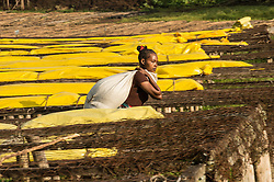 Laborers work at the Tepi plantation in Kaffe, Ethiopia.