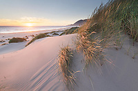 Dunes and dunegrass at sunset. Nehalem State Park, Oregon