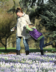 ©London News pictures. 14.02.2011. Jodie Thompson and young friend Ruthie,7,  (surname not supplied) tiptoe carefully through the crocuses covering the ground at Kew Garden's.  People enjoy the sunshine in Kew Garden's, London, today (Mon) after a weekend of rain and cloud. Picture Credit should read Stephen Simpson/LNP