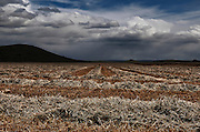 Digitally manipulated image of a field with dramatic sky
