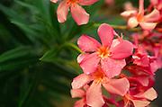 pink flower<br />