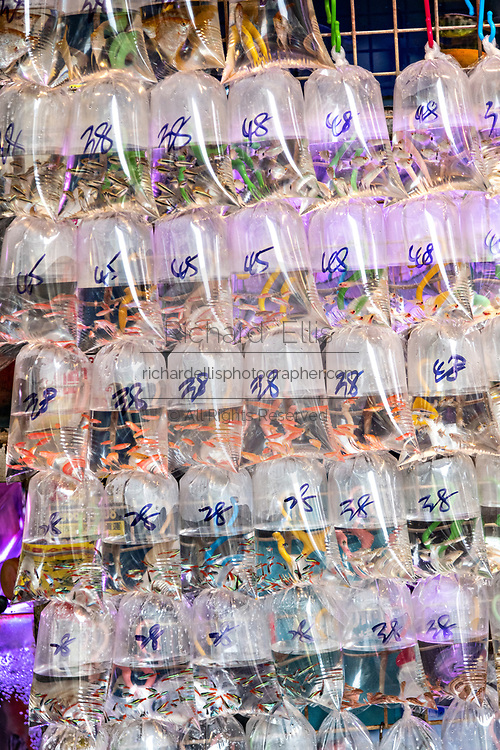 Plastic bags holding pet goldfish on display at the Tung Choi Street North, better known as the Goldfish Market in the Mong Kok district of Kowloon, Hong Kong. Chinese traditionally believe that goldfish are good Feng shui an an auspicious item that can bring good luck to a home.