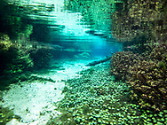 Underwater Scene<br /> <br /> Bryce Gibson/Engbretson Underwater Photography