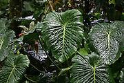 Lyon Arboretum, Oahu, Hawaii<br />