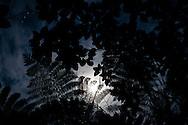 Moonlight shining through the rainforest canopy of Gunung Leuser National Park, Sumatra, Indonesia.