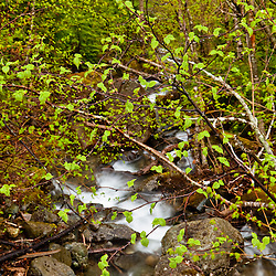 Stream in spring.  Stratton, Maine. Tributary to the South Branch of the Carrabassett River.