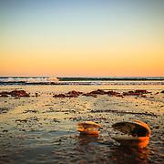 Seashells down by the seahore.