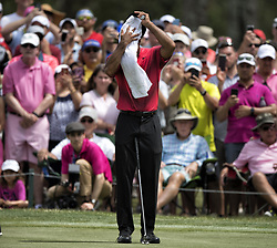 May 13, 2018 - Ponte Vedra Beach, FL, USA - The Players Championship 2018 at TPC Sawgrass..Tiger Woods on #7 green (Credit Image: © Bill Frakes via ZUMA Wire)
