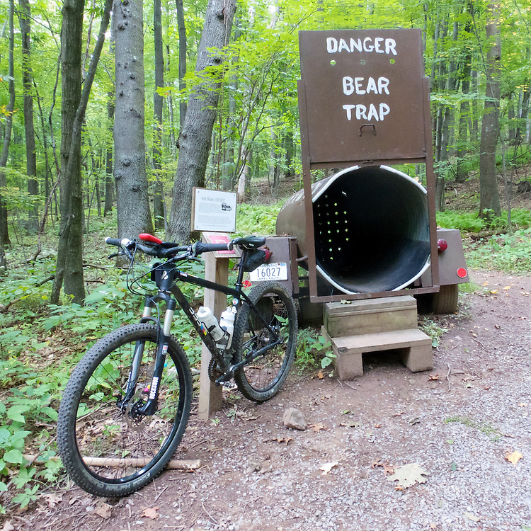 Meadow Mountain Trail has a level, wide stretch that is pleasant and easy. Beware of the bears though…