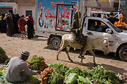 A local man rides a donkey through the weekly market at Qurna, a village on the West Bank of Luxor, Nile Valley, Egypt. The mule transports the male who holds a stick in a vertical position, ready to coax the animal faster when required. Amidst the bustle of this busy regular event, people from many miles around have come to trade and buy their provisions.