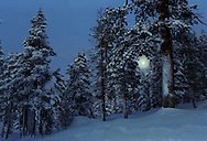 A full moon sets on an early winter morning at Bear Valley, CA., December, 1988.