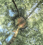 @paulmarnef @isopixbelgium #belgium #belgique #belgie #360 #360photography #360photo #fineart #fineartphotography #instagood #picoftheday #photooftheday #tree #trees #forest #wallonia #wallonie #nature #spring #printemps #green #panoramic #tinyplanet #miniplanet #miniplanete #tiny #leaves #greenleaves #landscape