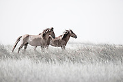 """""""There are far, far better things ahead than any we leave behind""""  ~ C.S. Lewis<br /> <br /> Tracie Spence fine art photography series of the Spanish Wild Mustangs"""