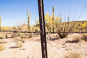"03 MAY 2012 - VEKOL VALLEY, RURAL PINAL COUNTY, AZ:     A barbed wire fence marks the boundary between Bureau of Land Management land and the Tohono Oodham Nation south of Interstate 8 and west of Casa Grande in rural Pinal County. The area has been a hotbed of illegal immigrant and drug smuggling for years. The BLM has undertaken a series of ""surges"" in the area, increasing their law enforcement patrols and partnering with Border Patrol and Pinal County Sheriff's Department officers to reduce criminal activity in the area.      PHOTO BY JACK KURTZ"