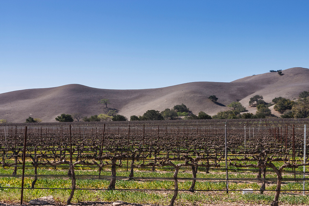 Firestone Vineyard. Founded in 1972 was Santa Barbara county's first estate winery and is in the peaceful Santa Ynez Valley near the town of Los Olivos. It's pretty sandy soil so there's not a lot of nutrients and as a result, some well concentrated flavours from the wines.