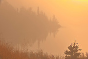 Trees and fog at sunrise at Lyons Lake.<br />