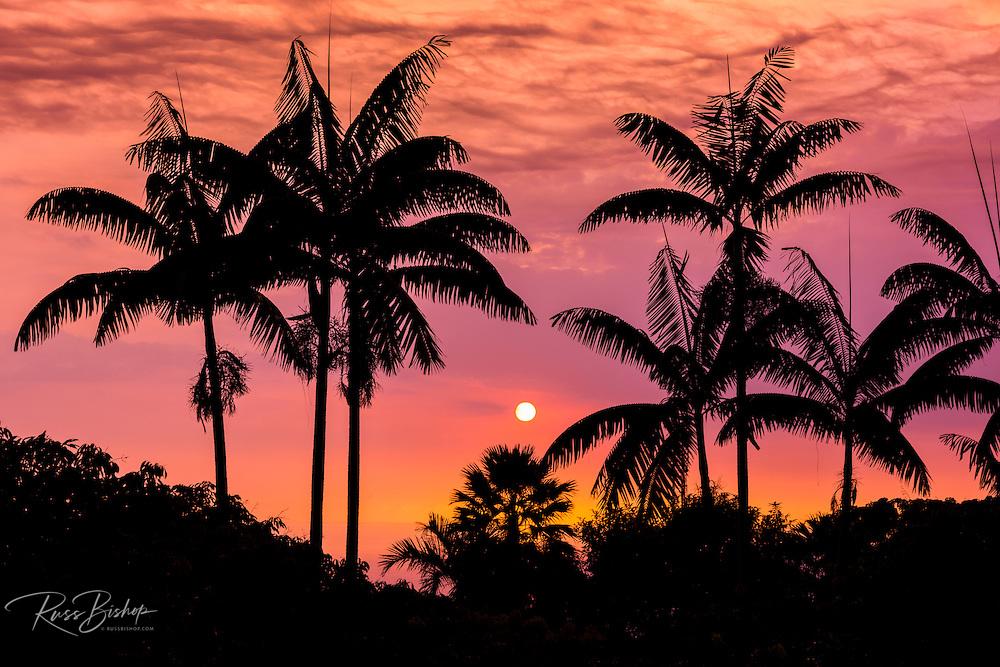 Sunset through silhouetted palm trees, Kona Coast, The Big Island, Hawaii USA