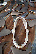 Shark fins  & jaws commercial catch<br /> Quetzalito<br /> Guatemala<br /> Central America