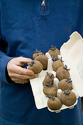 Man holding chitted potatoes placed in an egg box