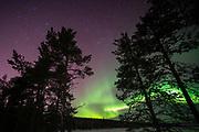 A Northern light over Lapland forest , Jukkasjarvi, Sweden.