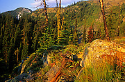 Below Mount Robinson at sunrise. Mount Robinson Roadless Area, Purcell Mountains, northwest Montana