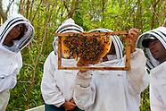 Island Beekeepers