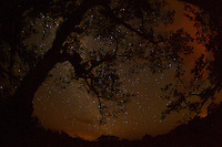 Night sky from the canopy tower at the Tiputini Biodiversity Station, Orellana Province, Ecuador. The orange light is from gas flares in Yasuni National Park