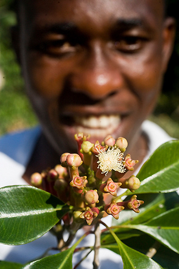 Young African man smilingly holds up a twig of cloves, just broken off the tree.