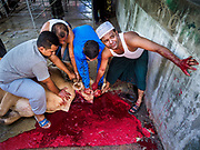 01 SEPTEMBER 2017 - BANGKOK, THAILAND: A bull is killed during the Qurbani (ritual sacrifice of livestock) at the celebration of Eid al-Adha at Haroon Mosque in Bangkok. Eid al-Adha is also called the Feast of Sacrifice, the Greater Eid or Baqar-Eid. It honours the willingness of Abraham to sacrifice his son. Goats, sheep and cows are sacrificed in a ritualistic manner after services in the mosque. The meat from the sacrificed animal is supposed to be divided into three parts. The family retains one third of the share; another third is given to relatives, friends and neighbors; and the remaining third is given to the poor and needy.     PHOTO BY JACK KURTZ