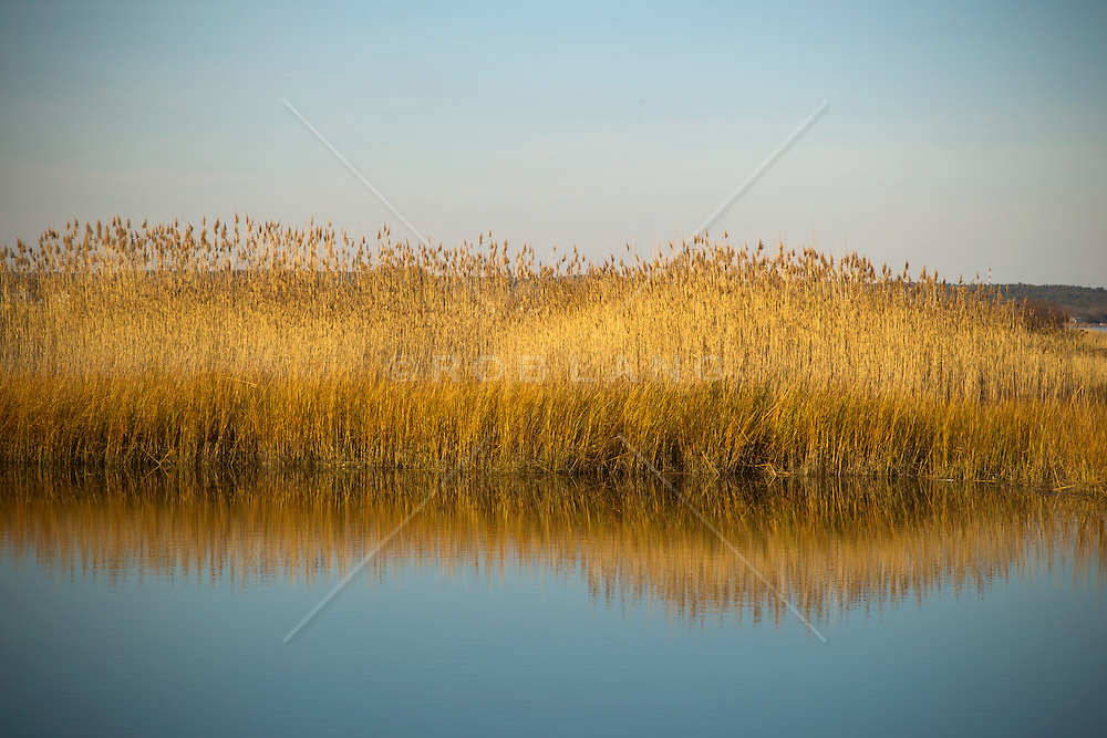 grassland and waterway in The beautiful Hamptons