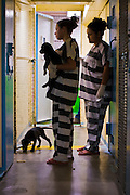 18 JULY 2005 - PHOENIX, AZ, USA: Inmates in the Maricopa County Jail, play with puppies at the Maricopa Animal Safe Hospice (MASH) an animal shelter created by Maricopa County Sheriff Joe Arpaio. Arpaio created the no kill shelter in 2000 and staffs it with women inmates from the county jail system. Most of the 60 dogs and 32 cats in the shelter were rescued from abusive homes. The animals are available for adoption to homes in Maricopa County. The shelter is housed in an old jail next to the county courthouse. Working in the shelter is considered a plum assignment by inmates and there is a waiting list to be assigned to the shelter. In 2011, the US Department of Justice issued a report highly critical of the Maricopa County Sheriff's Department and the jails. The DOJ said the Sheriff's Dept. engages in widespread discrimination against Latinos during traffic stops and immigration enforcement, violates the rights of Spanish speaking prisoners in the jails and retaliates against the Sheriff's political opponents.     PHOTO BY JACK KURTZ
