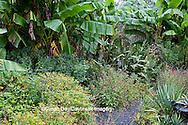 65821-00219 Salvias, Banana Plants, and arbor in garden at Montrose Gardens Hillsborough, NC