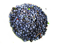 Blueberries from the Yellow Dog Plains, Marquette County, Michigan