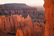 Sunrise light on hoodoos, from the Navajo Loop Trail, Bryce Canyon National Park, UTAH