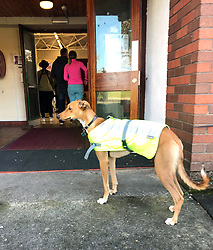 A dog waits for it's owner as he votes in the Irish presidential election at a polling station in St Joseph's School, Dublin.
